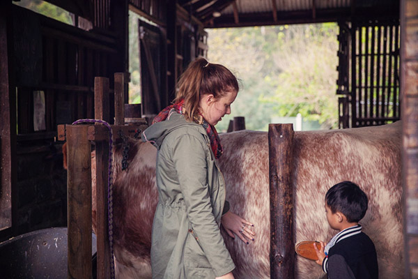 milking a cow at abbotsford convent melbourne