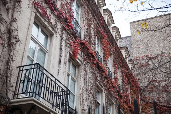 vine coloured buildings in paris